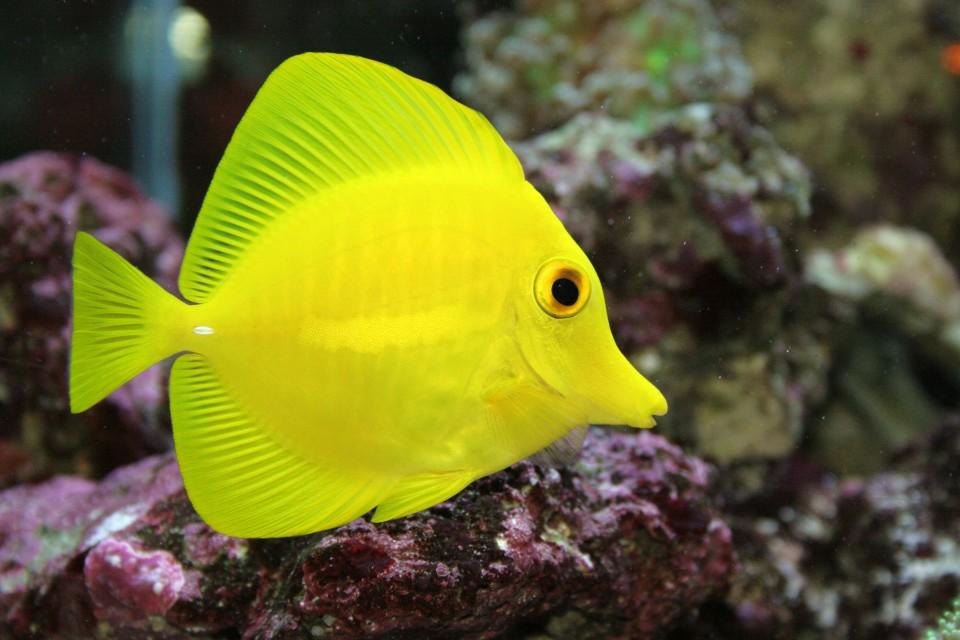 Rybky v mořském světě 1. díl