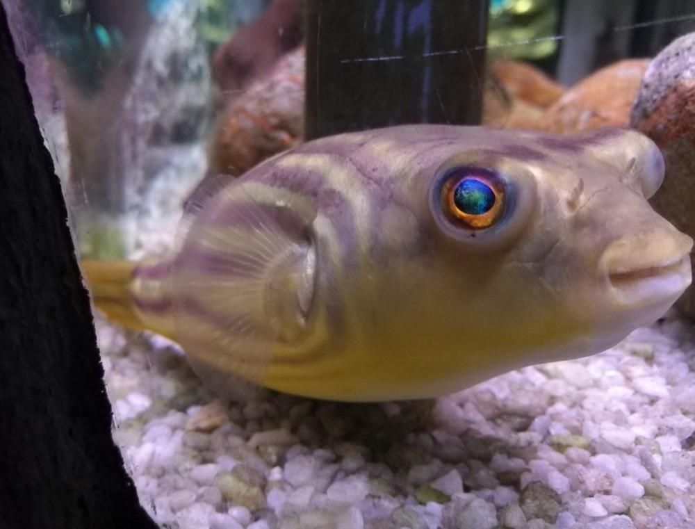 Rybí flotila připlula do Mořského světa