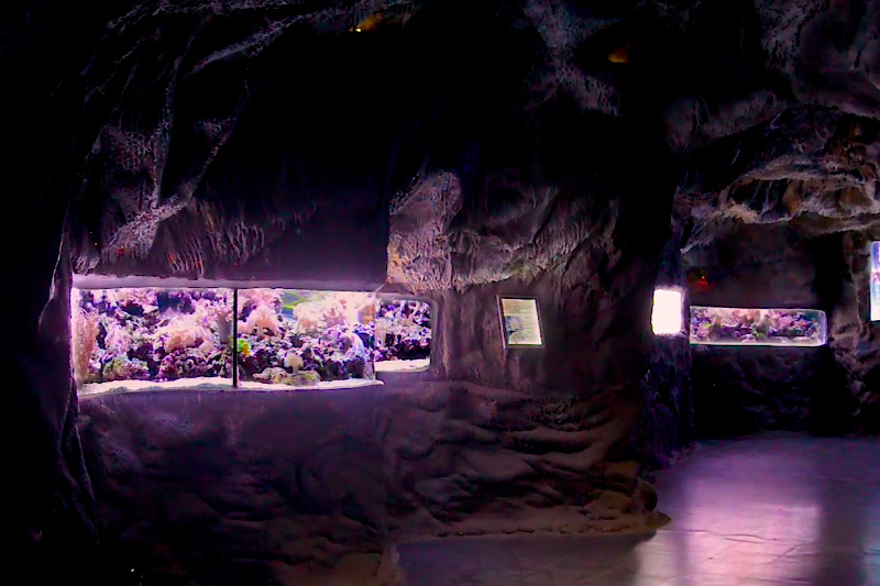 Představení korálové jeskyně