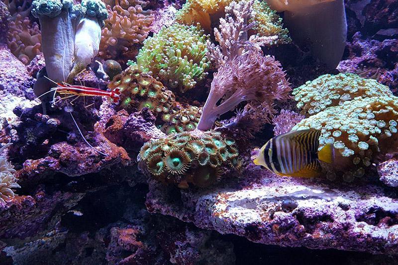 Korály v našem Mořském světě