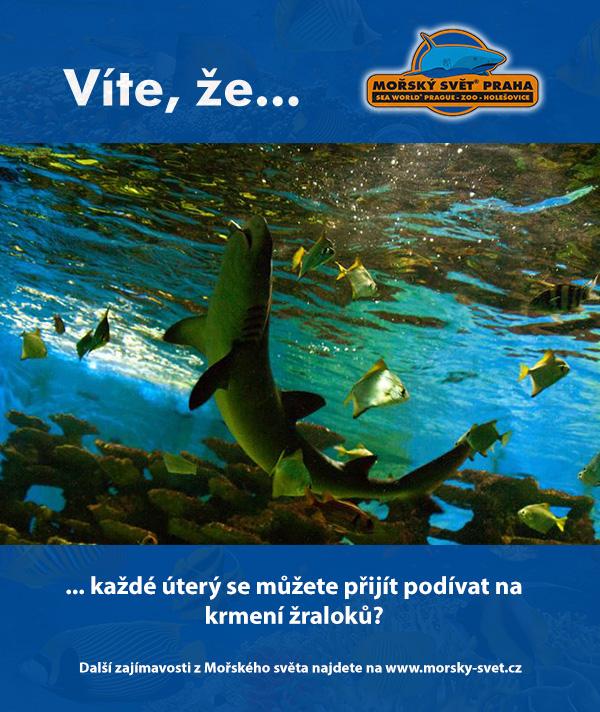 Krmení žraloků