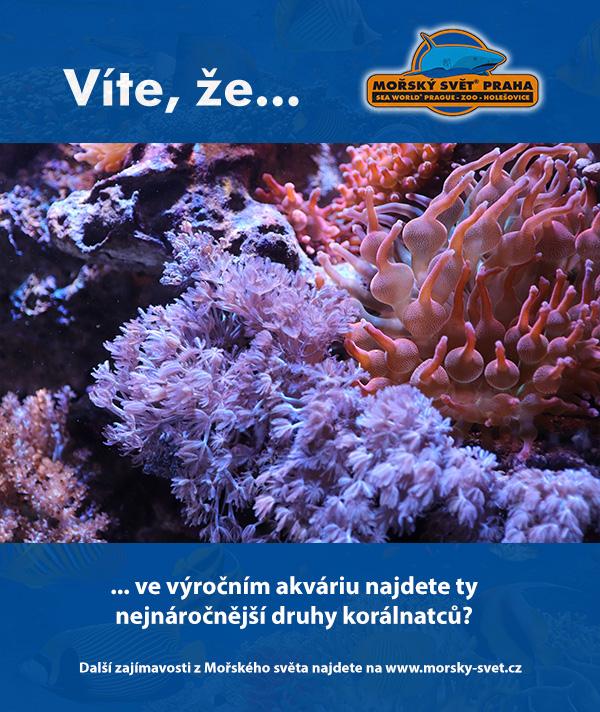 Výroční akvárium